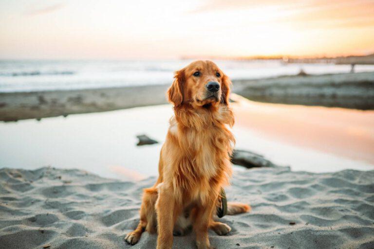 Kremacja psa jak wygląda
